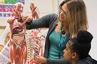 Biology students studying skeleton